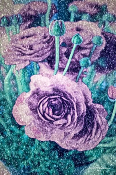 looks-like-a-lithograph ranunclus flowers green&purple