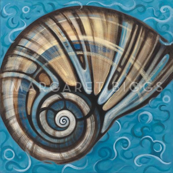 Shark Eye Shell Art   Margaret Biggs Fine Art