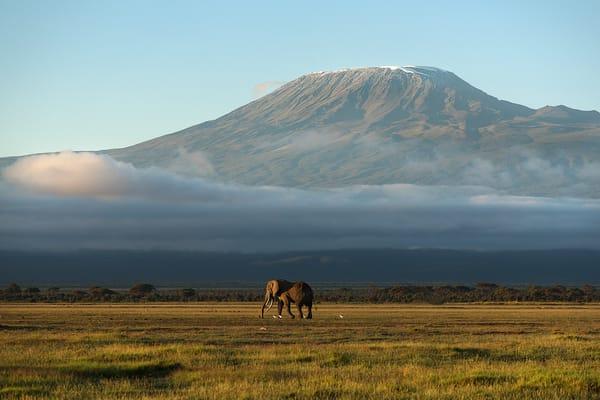 Mt Kilimanjaro Lone Elephant Photography Art   nancyney