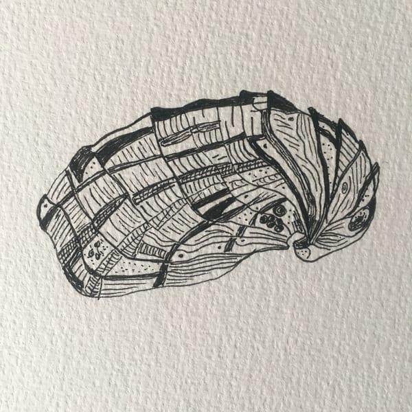 Shigoku Oyster Art | Friday Harbor Atelier