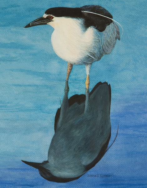 Black Crowned Night Heron Art | artalacarte