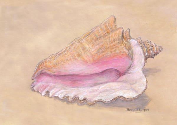 Queen Conch Art   artalacarte