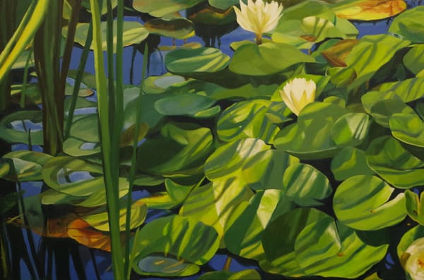 Water Lilies With Stripes Art   Helen Vaughn Fine Art