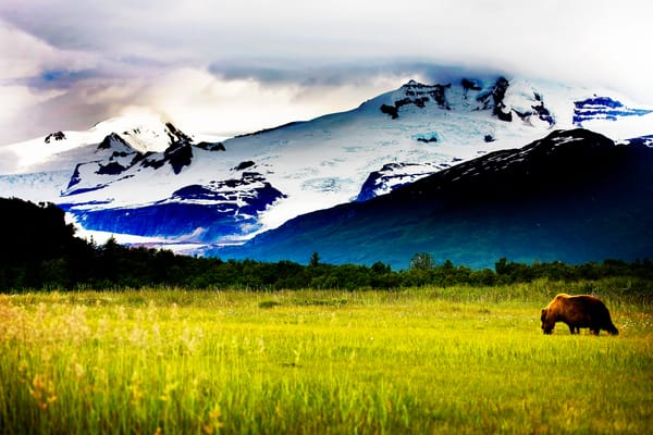 Wild Alaska Photography Art | Brokk Mowrey Photography