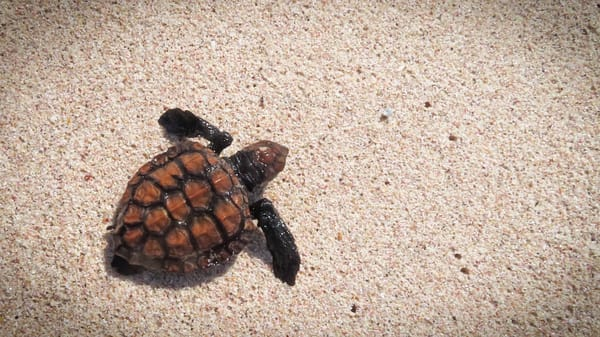 Sea turtle South Africa photography collection | Eugene L Brill