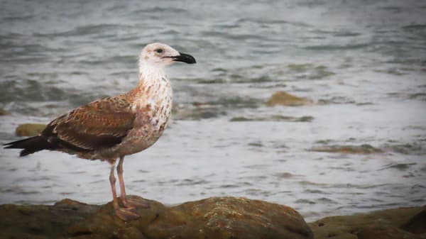 Sea Gull in the Western Cape, South Africa photography collection | Eugene L Brill