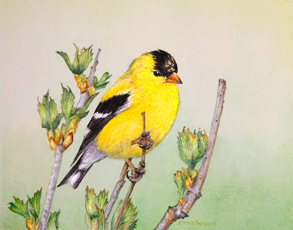 Goldfinch Male Art | artalacarte