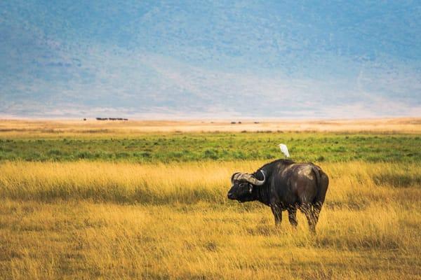 Africa, NgorongoroNational Park, safari