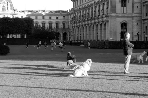 Public Lawn In Paris Art | i Art Collector