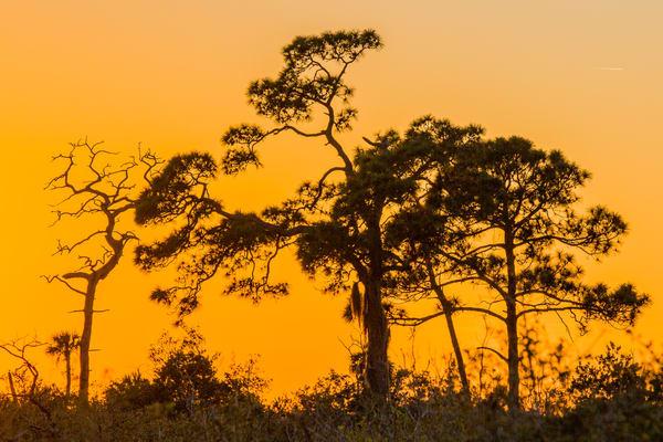 Everglades Sunrise Photography Art   Brokk Mowrey Photography