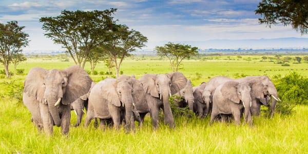 Protective Herd Photography Art | Brokk Mowrey Photography