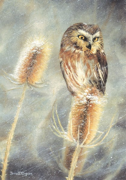 Saw Whet Owl And Teasel Art | artalacarte