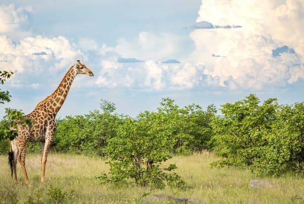 Dream Of Africa Art   TG Photo