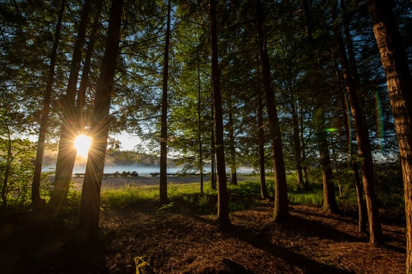 Sunrise over the Kayaks and in between the trees at Black Moshannon State Park