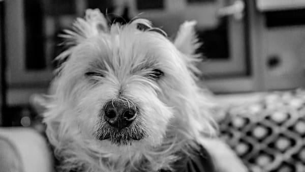 Dog Noes Best Photography Art | Cid Roberts Photography LLC