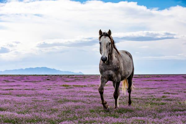 Desert Bloom Photography Art | Brokk Mowrey Photography