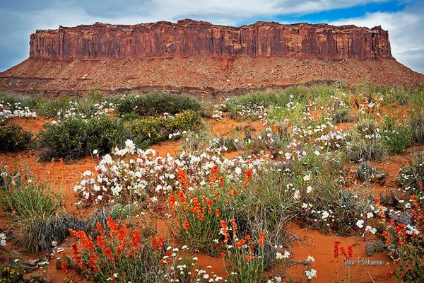Desert Flora At White Cracik | Art in Nature