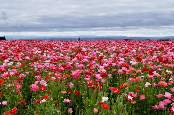 Oregon Flowers Photo