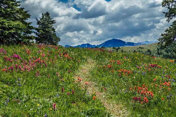 Colorado Wildflower Trail Art | Kirk Fry Photography, LLC
