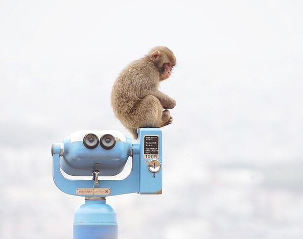 Monkey Watch Art | Danny Johananoff