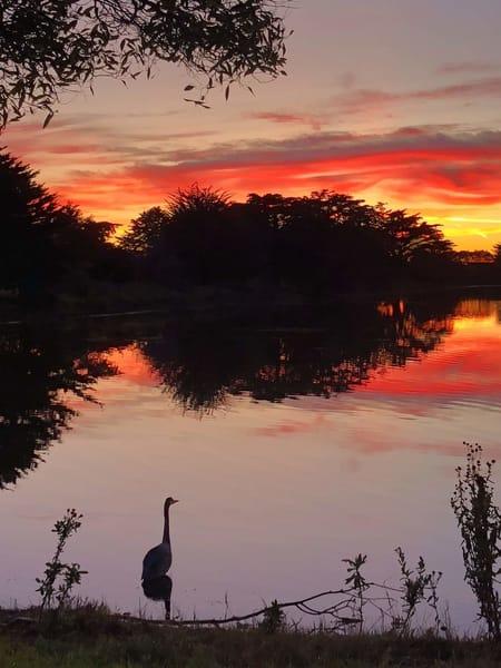 Sunset Heron Art | Off The Edge Art