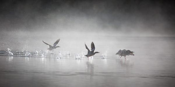 Flight Control Photography Art   Brokk Mowrey Photography