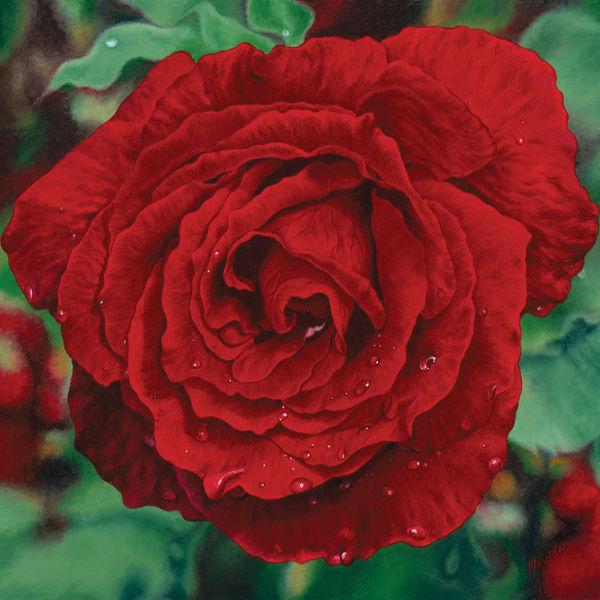 Red Rose   Love   Original Art   Mercedes Fine Art