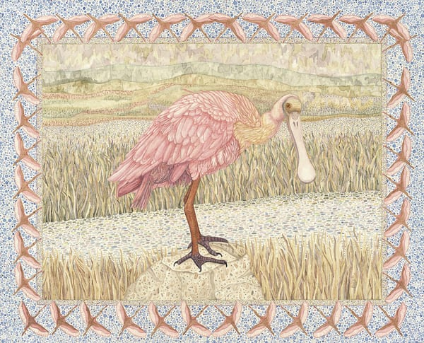 Roseate Spoonbill portrait by Judy Boyd Watercolors
