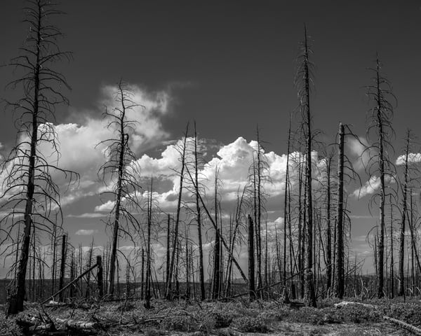 Burn Area and Clouds photo art print.