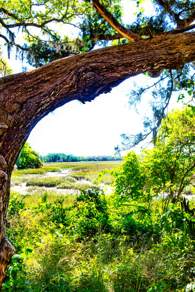 Live Oak  & Spanish Moss Frame the View