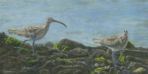 """""""Crab Cakes""""   Whimbrels Art 