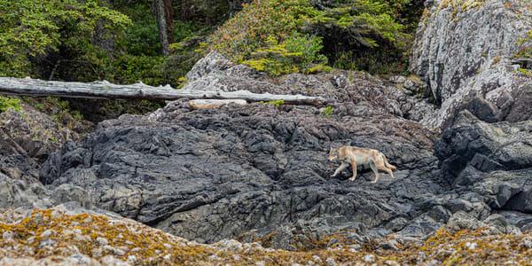 Sea Wolf | Terrill Bodner Photographic Art
