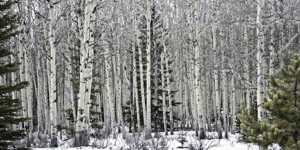 Moose Playground | Terrill Bodner Photographic Art