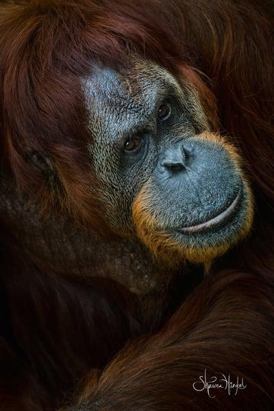 Wildlife Photographs for Sale as Fine Art
