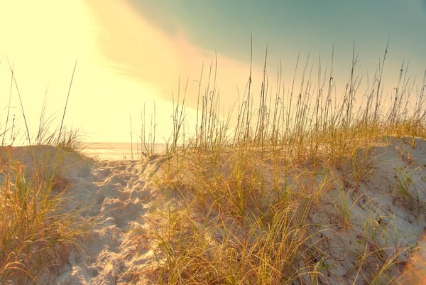 Sunset on the dune, Amelia Island