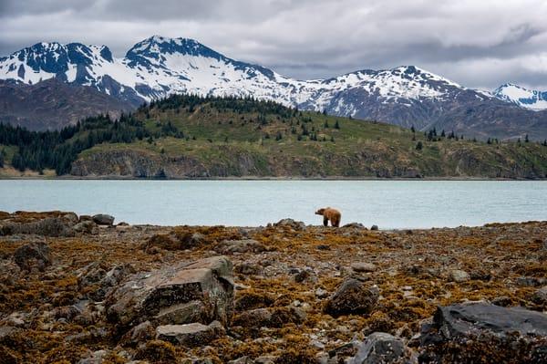 Katmai Wilderness Photography Art | Carol Brooks Parker Fine Art Photography