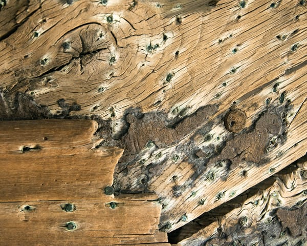 Recovered 1818 Whaler Keel - Detail