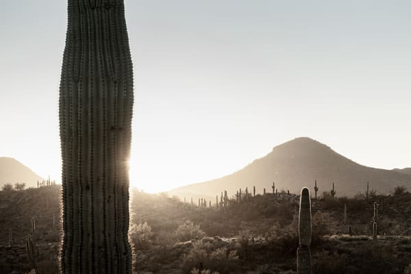 Sonoran Golden Hour 1 Photography Art | Spry Gallery