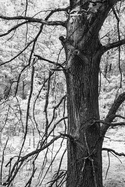 Tangled Nature Of Growing Things 3 Photography Art | Spry Gallery