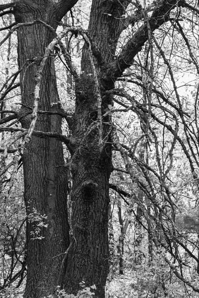 Tangled Nature Of Growing Things 1 Photography Art | Spry Gallery
