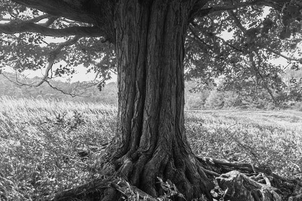 Maple Tree Photography Art | Spry Gallery