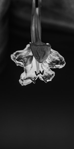 Drop Flower Photography Art | Spry Gallery