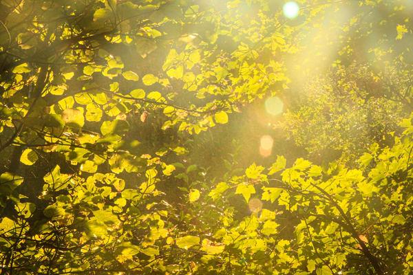 Sun Thru Leaves Photography Art | Spry Gallery