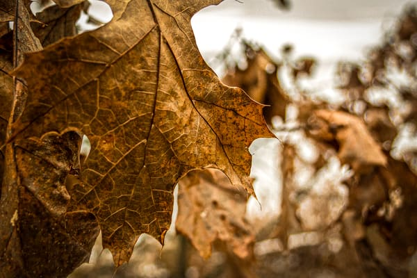 Rusty Leaf Photography Art | Spry Gallery
