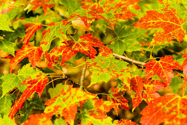Fall Leaves Photography Art | Spry Gallery