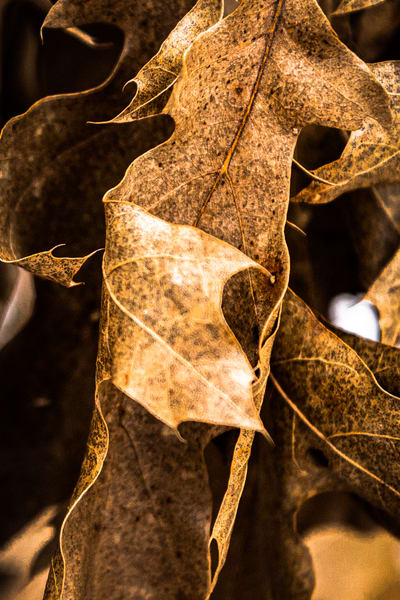 Winter Leaves Photography Art | Spry Gallery
