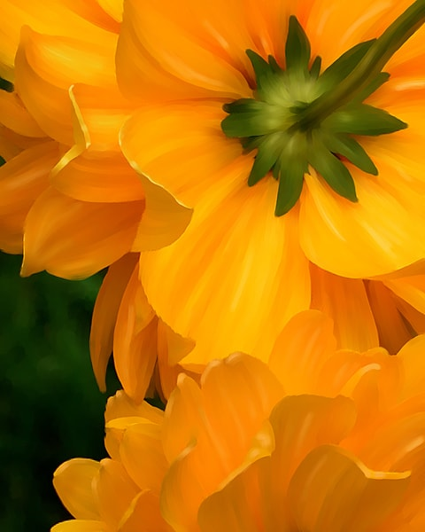 Fine Art Floral and Nature photography: Shop prints by An Artist's View Photography