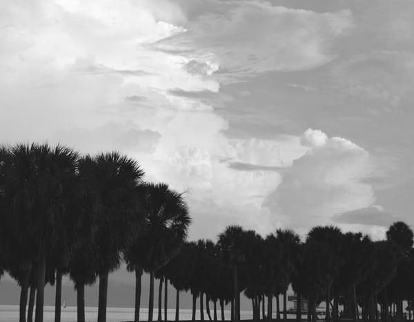 Gloomy Palms Art   Renee Bitinas Fine Art