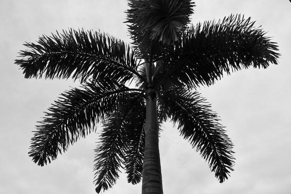 Simple Palm Art   Renee Bitinas Fine Art