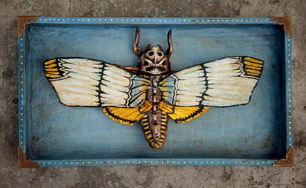The Rare Slender Winged Death Mask Moth Art   artalacarte